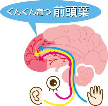 育脳 前頭葉を育てる